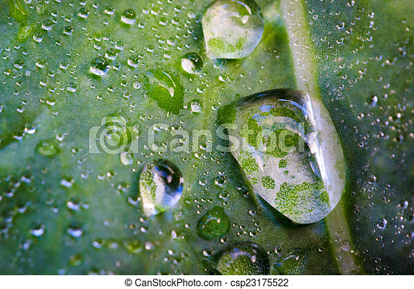 water drop on green leaf - csp23175522