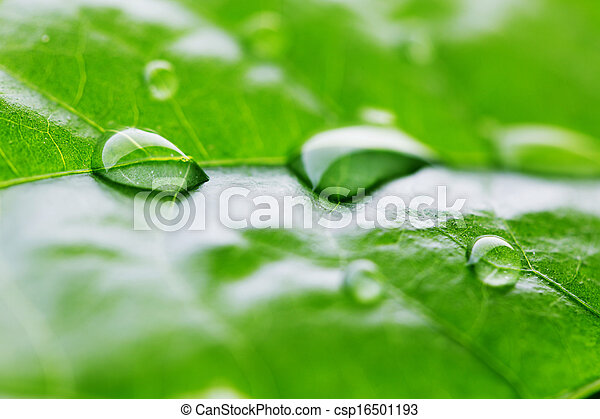 Water drop on green leaf - csp16501193