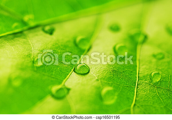 Water drop on green leaf - csp16501195