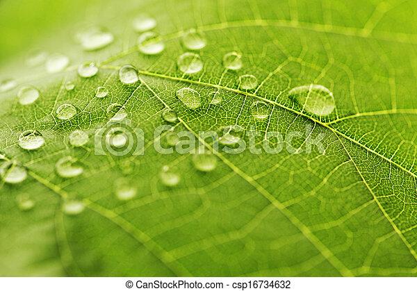 Water drop on green leaf - csp16734632