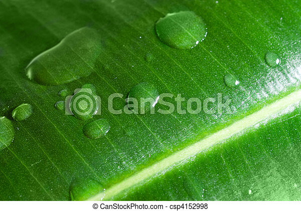 water drops on green leaf - csp4152998