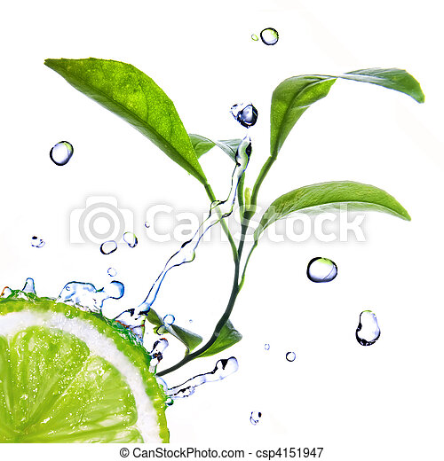 water drops on lime with green leaves isolated on white - csp4151947
