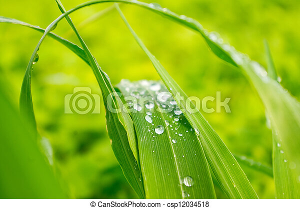 Water drops on the green grass - csp12034518