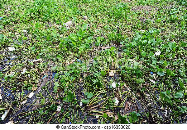 Water hyacinth and garbage - csp16333020