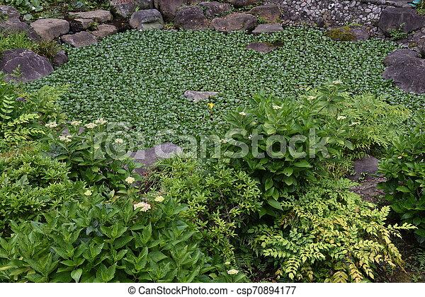 Water hyacinth flowers - csp70894177