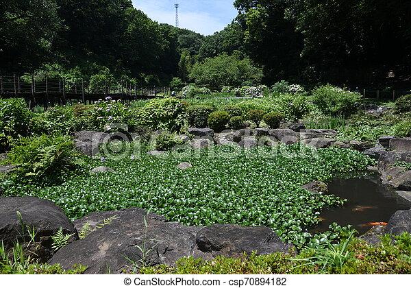 Water hyacinth flowers - csp70894182