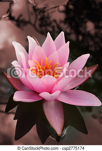 water lily flower - csp2775174