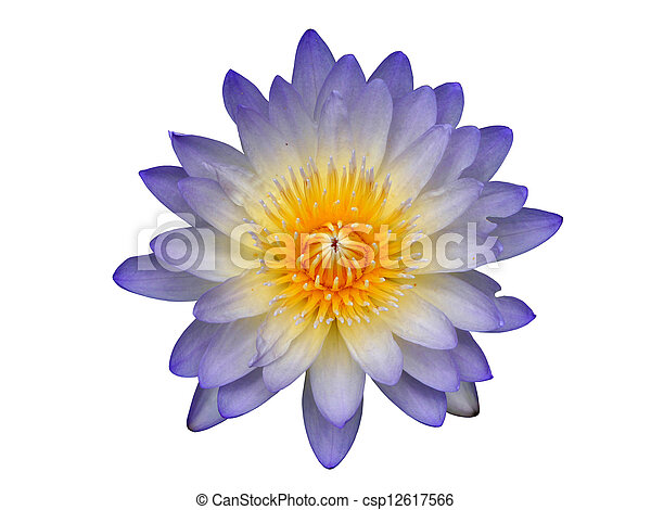 Water lily in white background. - csp12617566