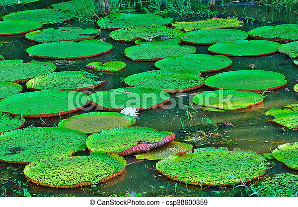 Water lily - csp38600359