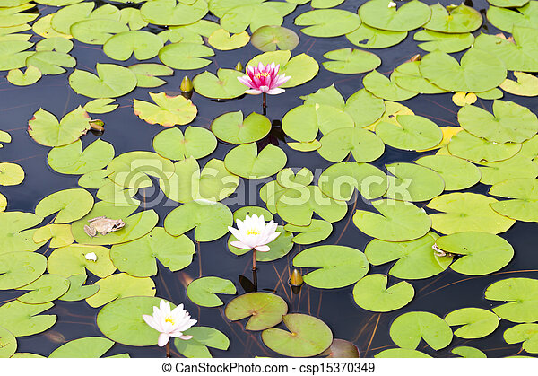 Water-lily - csp15370349