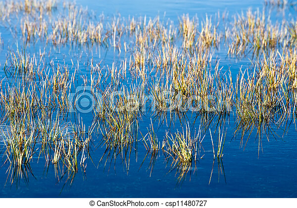 Water meadow with growing grass. Agriculture background - csp11480727