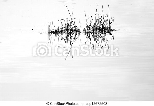 Water mirror and reed with reflection - csp18672503