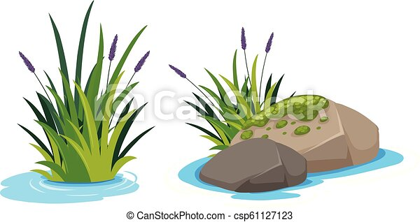 Water plant on white background - csp61127123