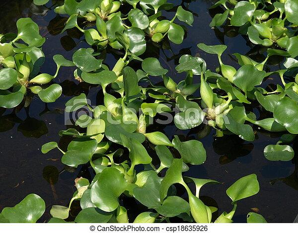 Water plant - csp18635926