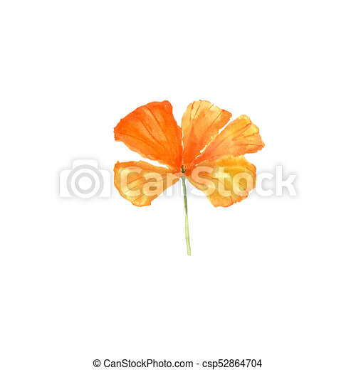 watercolor botanical illustration of california poppy flower