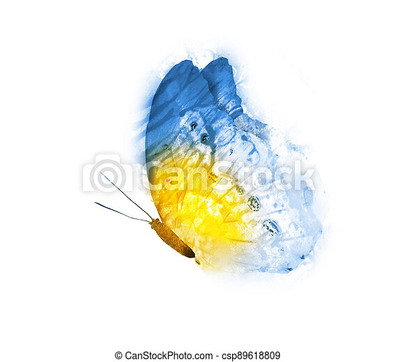 Watercolor butterfly , isolated on white background - csp89618809