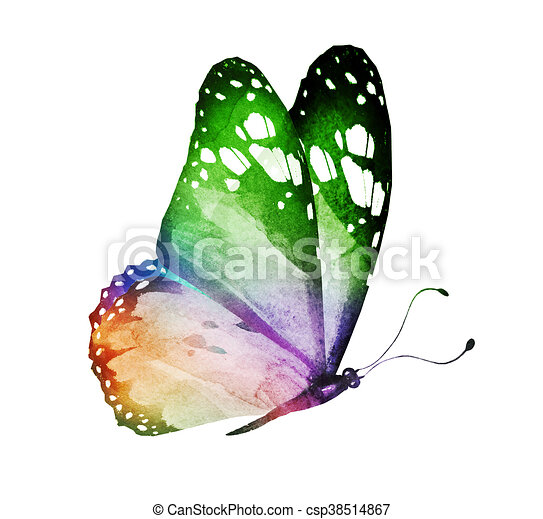 Watercolor butterfly , isolated on white - csp38514867