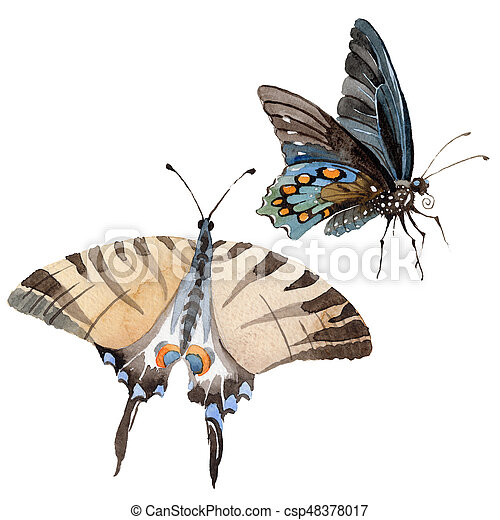 Watercolor butterfly tender insect, intresting moth, isolated wing illustration - csp48378017