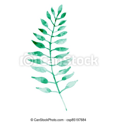 Watercolor green leaf isolated on white background. - csp85197684