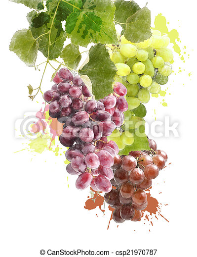 Watercolor Image Of Grapes Watercolor Digital Painting Of