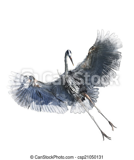 Watercolor Image Of Great Blue Heron - csp21050131