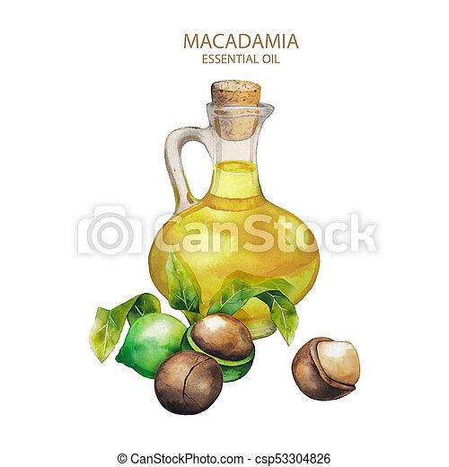 Watercolor macadamia oil - csp53304826