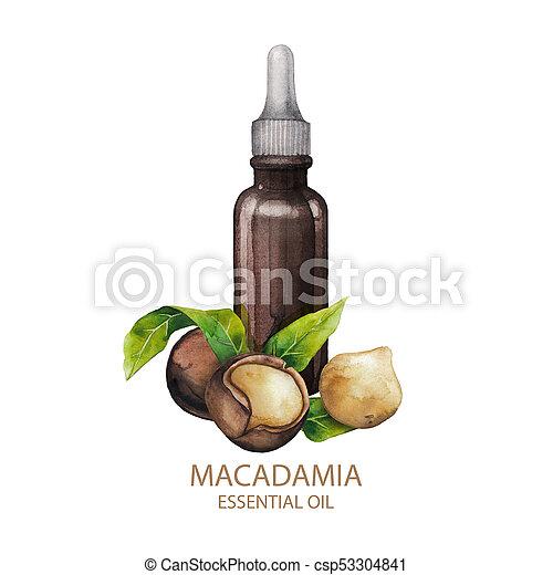Watercolor macadamia oil - csp53304841