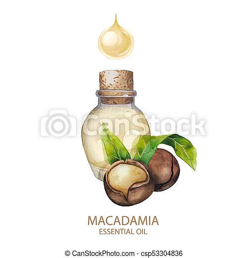 Watercolor macadamia oil - csp53304836