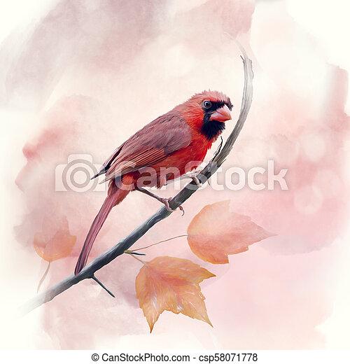 watercolor, mannelijke , kardinaal, noordelijk - csp58071778