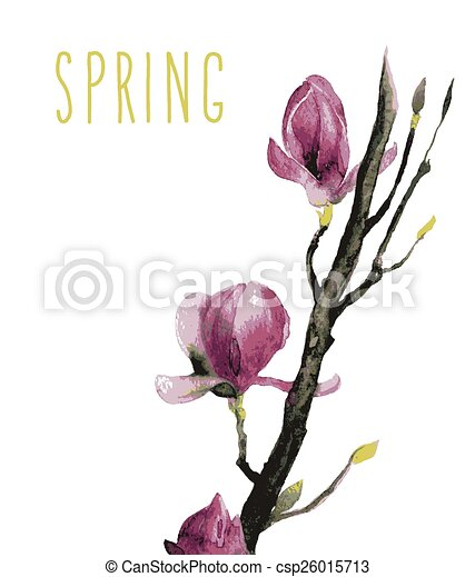 Watercolor of Magnolia flowers - csp26015713