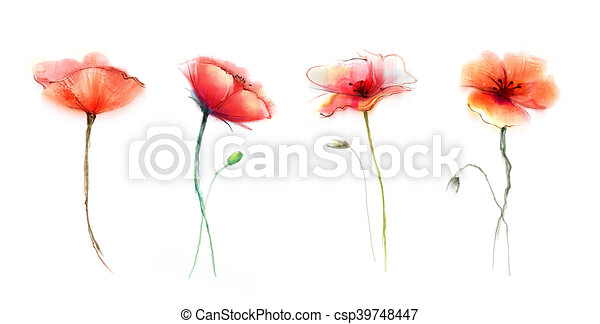Watercolor painting poppy flower isolated flowers on white watercolor painting poppy flower isolated flowers on white background set of pink and red poppy flower painting hand painted watercolor floral mightylinksfo