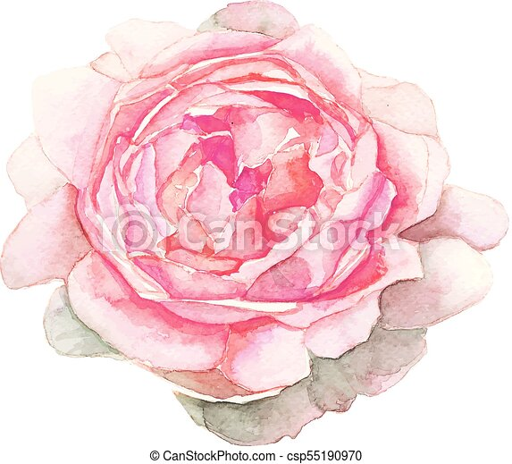 Watercolor pink flower painting on white background the isolated watercolor pink flower painting on white background csp55190970 mightylinksfo