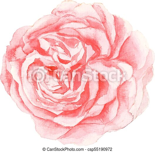 Watercolor pink flower painting on white background the isolated watercolor pink flower painting on white background csp55190972 mightylinksfo