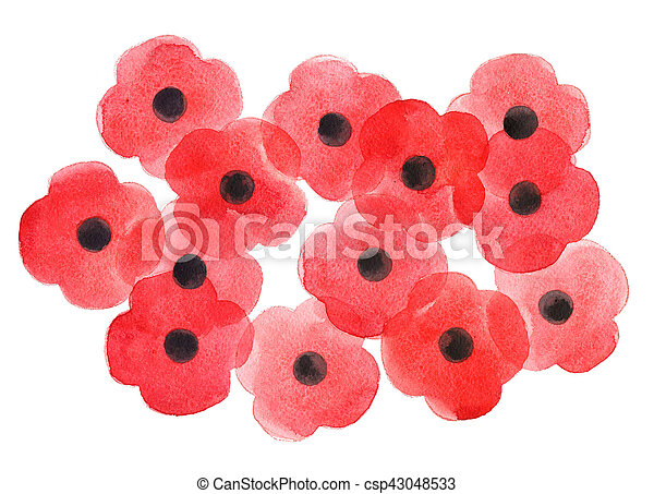 Watercolor poppy flower remembrance day white background mightylinksfo