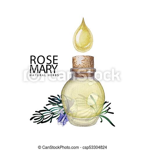 Watercolor rosemary oil - csp53304824