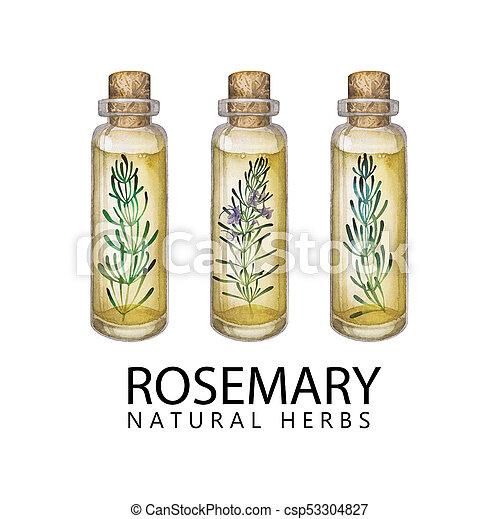Watercolor rosemary oil - csp53304827