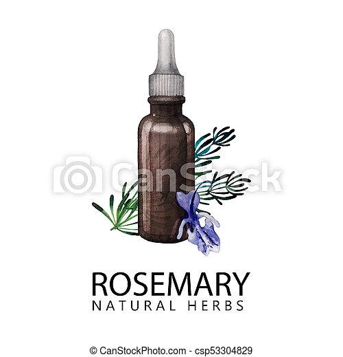 Watercolor rosemary oil - csp53304829