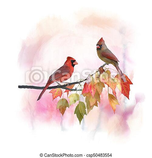 watercolor, vrouwlijk, mannelijke , noordelijke kardinalen - csp50483554