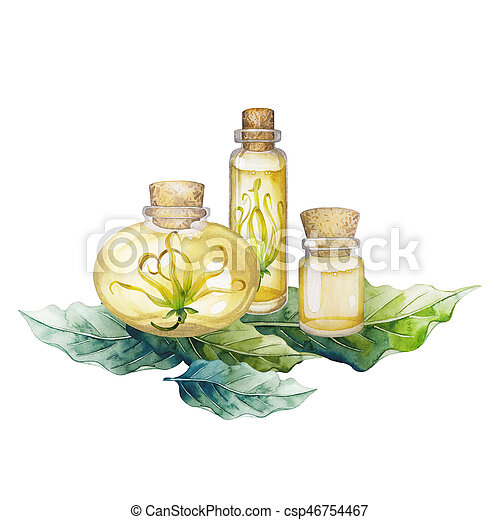 Watercolor Ylang Ylang Oil Hand Painted Bottles Leaves And Flowers