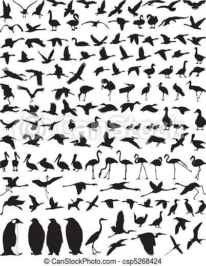 Waterfowl - csp5268424