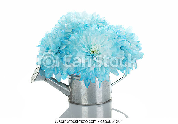 Watering can with blue flowers - csp6651201