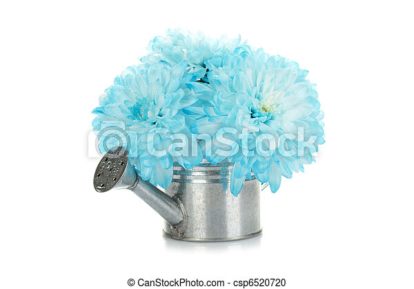 Watering can with blue flowers - csp6520720