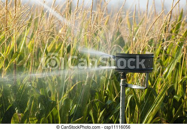 Watering the corn plantation - csp11116056