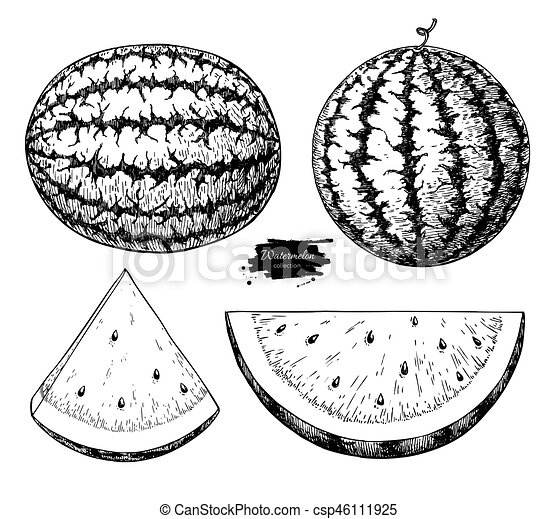 Watermelon And Slice Vector Drawing Set Isolated Hand Drawn Berry