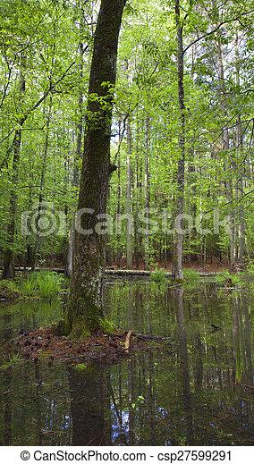 Watery tree - csp27599291