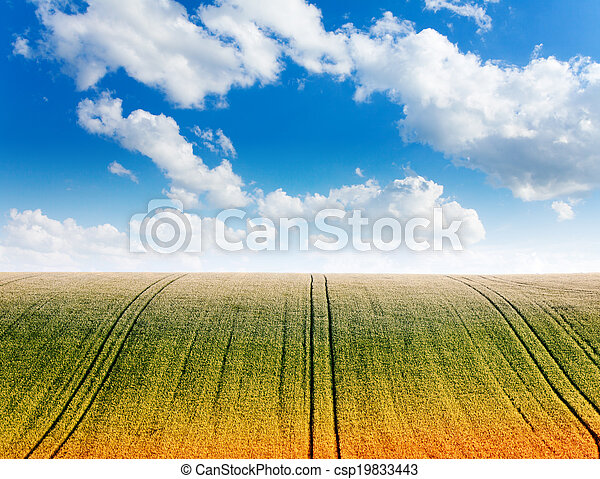 Wavy field with cloudy sky and horizon - csp19833443