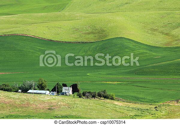 Wavy Wheat Fields - csp10075314