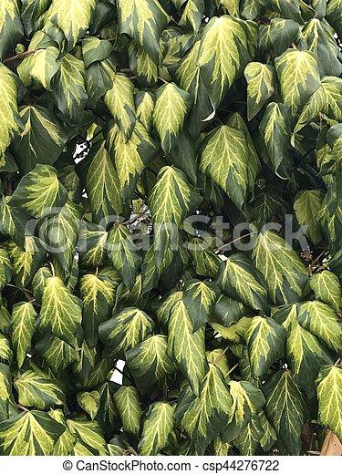 Weathered leaves on the wall background - csp44276722