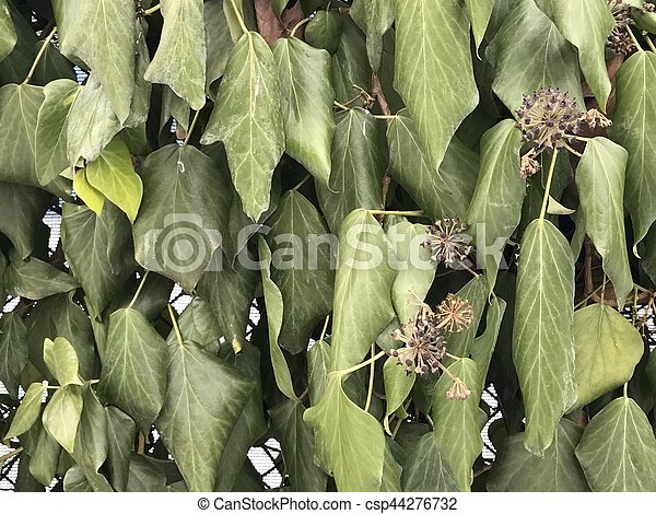 Weathered leaves on the wall background - csp44276732
