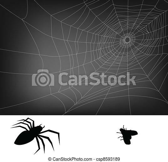 web, ragno - csp8593189